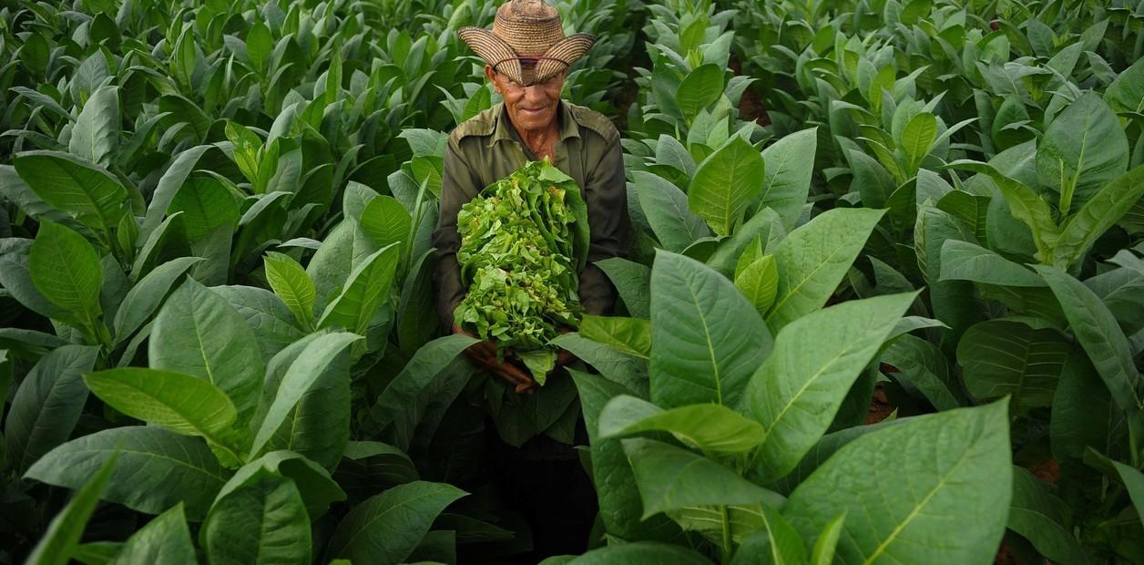 Alejandro Robaina, gran productor del famoso tabaco cubano